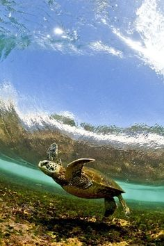 Dancing Honu by Clark Little