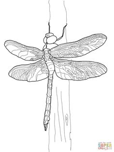 Green Darner Dragonfly   Super Coloring --> For the best coloring books and supplies including colored pencils, watercolors, gel pens and drawing markers, visit our website at http://ColoringToolkit.com. Color... Relax... Chill.