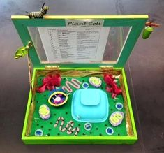Designed By Youth Pollicita Middle School: Animal And Plant Cell Models By Mr. Plant Cell Project Models, 3d Plant Cell Model, 3d Animal Cell Project, 3d Cell Model, Plant Cell Structure, Cell Model Project, Cell Project Ideas, Plant Cell Diagram, Biology Projects