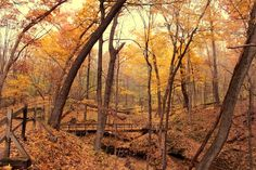 One of the hikes listed is Wild Cat Den, which is near Muscatine and a place I like to hike.
