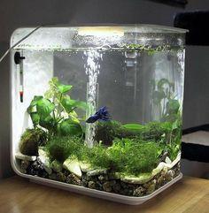 petit aquarium de forme originale
