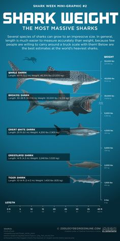 Shark Weight – The Most Massive Sharks