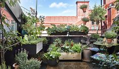 Growing Greens, Zinnias, Balcony Garden, Go Green, Gardening Tips, Succulents, Home And Family, Outdoor, Flowers