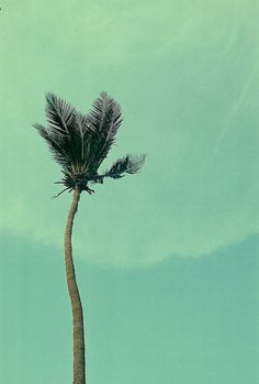 jenblatt:  Koh Tao, Thailand: Upside Down Broom on Flickr.