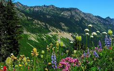 Nine Scenic Drives Through Pacific Northwest National Forests