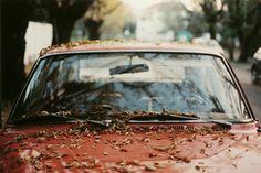 Autumn :] #leaves #autumn #fall