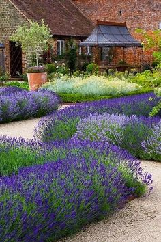 Lavender & Yarrow with Decomposed granite