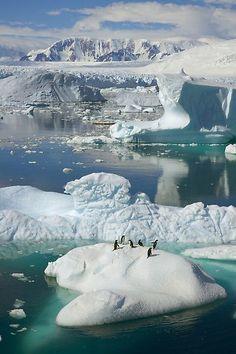 """""""petapeta:  Снимки «Замерзшая планета» от канала Discovery (31 фото)  """""""