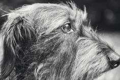 #photographie #photography #animal #dog #chien #teckel #nature #details #vintage #manon #debeurme #photographe #photographer Manon, Dogs, Nature, Vintage, Dachshund Dog, Photography, Animaux, Naturaleza, Pet Dogs