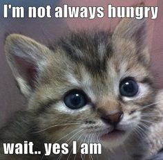 I'm not always hungry  wait.. yes I am http://cheezburger.com/9003934720