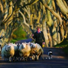 E And Y Galway Just love this picture. It captures a scene in farming rural Ireland ...