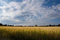 'Getreidefeld im Sommer' von Ronald Nickel bei artflakes.com als Poster oder Kunstdruck $6.48