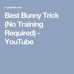 Best Bunny Trick (No Training Required) - YouTube