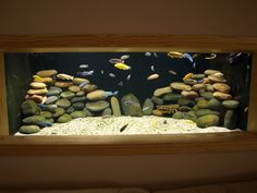 african cichlids freshwater fish tank...I like with just the stones...