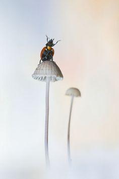 Funghi e coccinella. Francia Fotografo: Bastien Riu Premio Asferico 2013: le più belle foto di natura - Vincitore di categoria Sezione altri animali