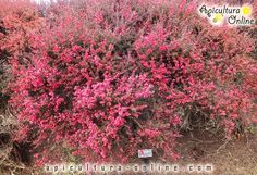Arbore de Manuka Nature, Flowers, Plants, Red, House, Beekeeping, Naturaleza, Floral, Haus