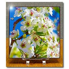 Pretty, white flowers with pink centers on green budding on a tree Desk Clock