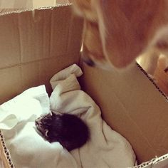 A Rejected Kitten Stumbled Into Their Home. And They Will Never Forget What Happened Next.