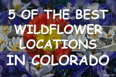5 of the Best Wildflower Locations in Colorado