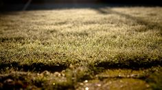 grass, lawn, morning - http://www.wallpapers4u.org/grass-lawn-morning/