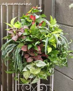 Hanging with foliage plants for Summer