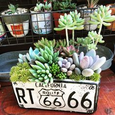 For today, I have some amazing succulents and cacti gardens that will take your breath away and leave you speechless. Succulents and cacti are perfect for Growing Succulents, Succulents In Containers, Cacti And Succulents, Planting Succulents, Garden Plants, Indoor Plants, House Plants, Planting Flowers, Cactus Planta