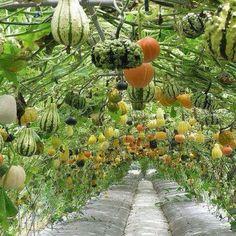 Melon archway