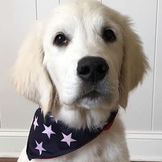 What's better than a Patriotic puppy?