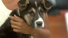 Olympian Gus Kenworthy reunites with stray puppies from Sochi  - TODAY.com