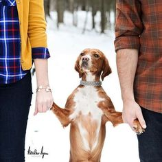 Enagement Photos with Pets / http://www.himisspuff.com/engagement-photos-with-pets-that-will-melt-your-heart/8/