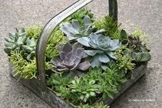 Hens & chicks planted in a zinc tray. Could also use a lined basket.