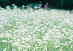 たんばらラベンダーパーク | Flickr - Photo Sharing!