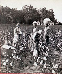 Women Carrying Baskets of Cotton, While Others Pick, Small Children in Foregroun. Antique Photos, Vintage Photos, Vintage Stuff, Old Pictures, Old Photos, Picking Cotton, Digital History, Tribe Of Judah, Black
