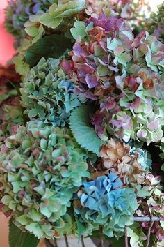 Drying Hydrangeas for Fall Crafting and Decorating!