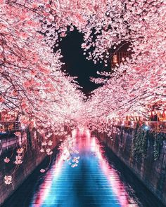 Explore wonderful places in Tokyo ▶️ lovely spring cherry blossom coming to an end here in Tokyo! Hope you all had a wonderful experience! Beautiful World, Beautiful Places, Beautiful Pictures, Wonderful Places, Nature Pictures, Places In Tokyo, Cherry Blossom Japan, Japanese Cherry Blossoms, Cherry Blossom Pictures