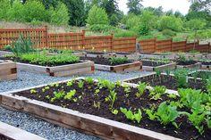 Como funciona um projeto de horta comunitária | Dinâmica Ambiental