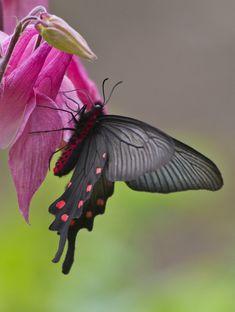 Butterfly - by Evgeny Slobodskoy