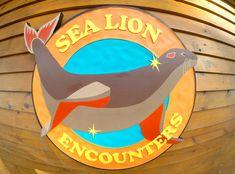 Sea Lion Encounters, Blue Lagoon Island, Bahamas!