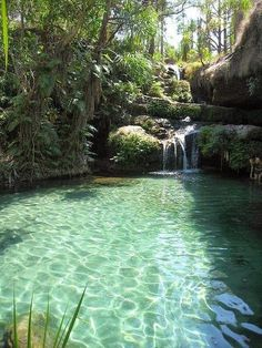 Natural swimming pools -I want ours to have a light colored bottom or stones to reflect a pretty color. And a waterfall