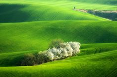 Green  carpet by Marcin Sobas, via 500px