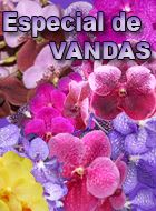 Orquidario4e Vandas