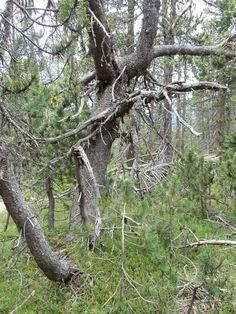 Sentiero 1m Trunks, Plants, Park, Drift Wood, Flora, Plant, Planting