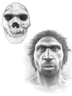 Homo heidelbergensis by Mauricio Antón