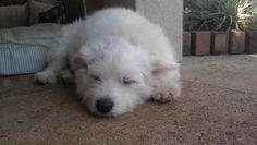 sleepy pooch.