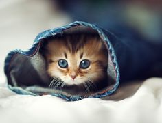 The Cutest Little Kitten in the World! *sigh*  <3