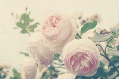 ♥ Kristybee Photography