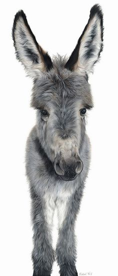 'I'm all Ears' Number 3 of the art I will be exhibiting  The original and limited edition prints are now for sale with 10% of each sale going to The Donkey Sanctuary  The Donkey Sanctuary is a UK based charity working worldwide to improve conditions for donkeys and mules. More details of their Non-Profit Organisation see their website http://www.thedonkeysanctuary.org.uk/   I hope you like her  Coloured Pencil on Strathmore 500 Bristol Board  #donkey #donkeyart #colouredpencil