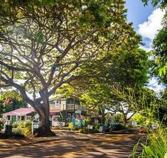 Old Koloa Town Poipu Kauai Once you've passed through the beautiful canopies of the Tree Tunnel you'll find yourself at Old Koloa Town. Home to the first successful sugar mill on all of Hawaii, this quaint town is one of Kauai's richest historical sights.