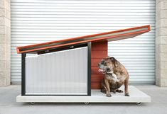Let your pooch live in the lap of luxury with the Dog Haus Luxury Dog House. This ultra modern dog house uses timeless materials. Dog Mansion, Luxury Dog House, House Dog, Modern Dog Houses, Modern Homes, Dog Milk, Niches, Cat Enclosure, Animal House