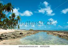 Reef At Carneiros Beach, Pernambuco, Brazil